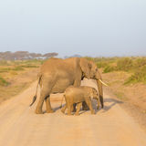 Elephants with calf  croosing dirt road. Royalty Free Stock Image