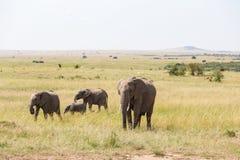 Elephants with calf Stock Photography
