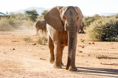 Elephants Charging royalty free stock image