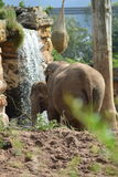 Elephants at chester zoo Stock Photo