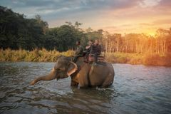 Elephants in Chitwan Royalty Free Stock Photo
