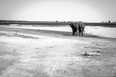 Twin brothers in chobe stock photo