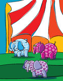 Elephants and circus Stock Image