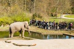 Elephants in Copenhagen Zoological Garden. COPENHAGEN, DENMARK - APRIL 18, 2015: The elephants at the popular Danish tourist attraction The Copenhagen Zoological stock images