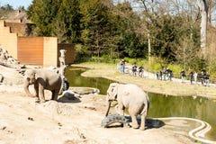 Elephants in Copenhagen Zoological Garden. COPENHAGEN, DENMARK - APRIL 18, 2015: The elephants at the popular Danish tourist attraction The Copenhagen Zoological royalty free stock photo