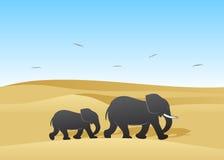 Elephants. Stock Photo