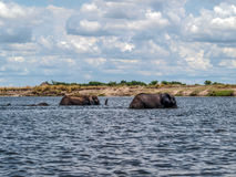 Elephants crossing river Chobe Stock Photo