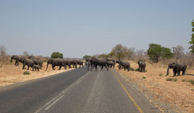 Elephants crossing the road in Africa Royalty Free Stock Photo