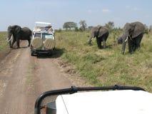 Elephants Crossing the Road Royalty Free Stock Photos