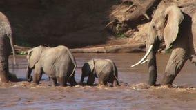 Elephants crossing a swollen river