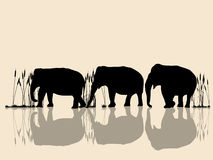Elephants crossing water. Background  illustration with wild elephants in the water Stock Image