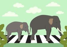 Elephants crossing zebra crossing, vector Stock Images