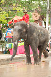 Elephants dancing in Songkran festival in Thailand. AYUTTAYA, THAILAND - APRIL 15: Songkran Festival is celebrated in a traditional New Year s Day from April 13 Stock Photos