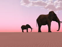 Elephants in a desert Royalty Free Stock Images