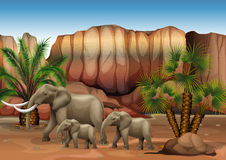 Elephants at the desert Stock Photo
