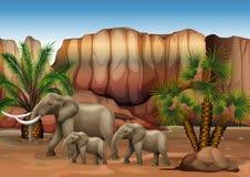Elephants at the desert. Illustration of the elephants at the desert Stock Photo