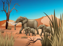 Elephants at the desert Stock Photography
