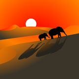 Elephants Desert Sundown. Illustration of elephants walking through the desert at sundown Stock Photography