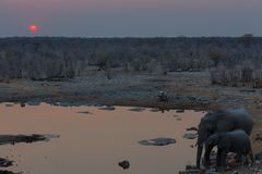 Elephants drinking water at sunset Royalty Free Stock Photos