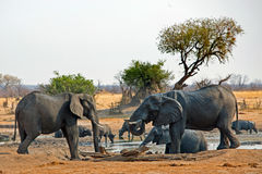 Elephants drinking at a waterhole with buffalo in the background Stock Photography