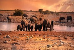 Sunset in Namibia, drinking elephants at waterhole