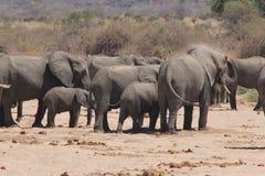 Elephants dusting Stock Photography