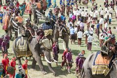 THAILAND ISAN SURIN ELEPHANT FESTIVAL ROUND UP Royalty Free Stock Images