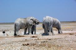 Elephants in Etosha Stock Photography
