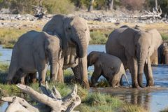Elephants in Etosha Stock Photos