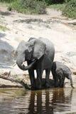 Elephants family Stock Photo