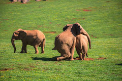 Elephants family on African savanna. Safari in Amboseli, Kenya, Stock Photo