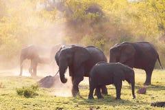 Elephants family Stock Photography