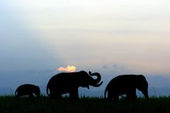 Elephants family silhouette Royalty Free Stock Images