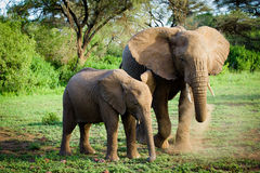 Elephants family Royalty Free Stock Photography