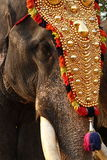 Elephants in Festival. A decorated head of an elephant from an Indian religious festival Stock Photography