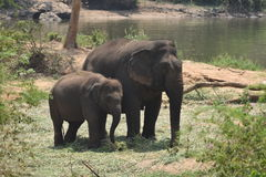 Elephants stock photography