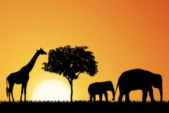 Elephants and giraffe in Africa  Royalty Free Stock Images