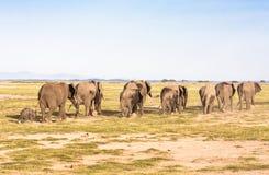 Elephants go away. Savanna. Park Amboseli, Kenya Stock Photo
