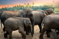 Elephants in the jungle Royalty Free Stock Images