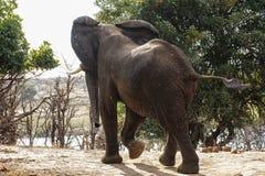 Elephants in Gonarezhou Royalty Free Stock Photos