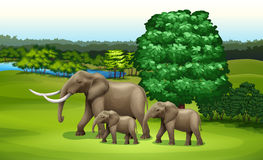Elephants and the green plants. Illustration of the elephants and the green plants Royalty Free Stock Image