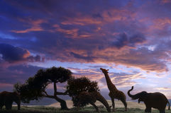 Elephants And Griraffes At Sunset Royalty Free Stock Photography