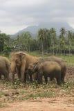 Elephants heard Royalty Free Stock Images