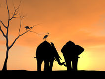 Elephants Holding Each Others Trunk Stock Photo