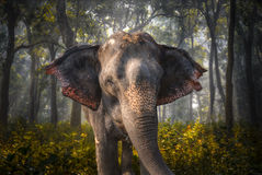 Free Elephants In Chitwan Royalty Free Stock Photos - 88718948