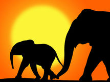 Elephants In The Sunset Stock Images