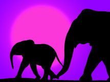 Elephants In The Sunset Royalty Free Stock Photos