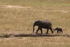 Free Elephants In Tsavo East Park Royalty Free Stock Photo - 41205925