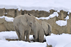 Elephants In Winter Stock Images