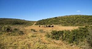 Elephants Interacting Stock Photo
